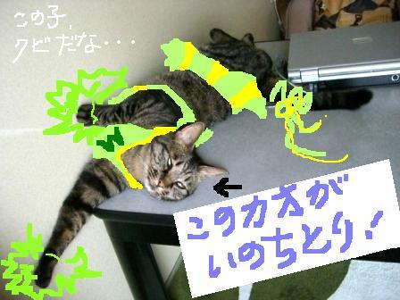 チア☆リーダー2