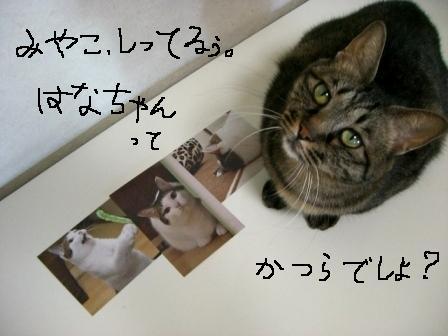 はなちゃん5