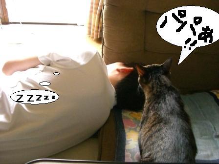 パパ、マジ寝1