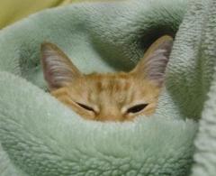 あんずちゃん・毛布1