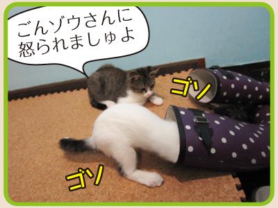 ホイップちゃん紹介3