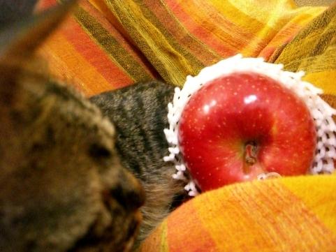 りんご部長5
