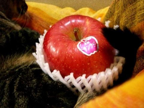 りんご部長4