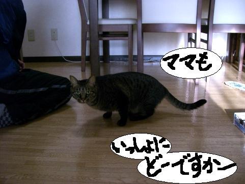 年末ぱやぱや4