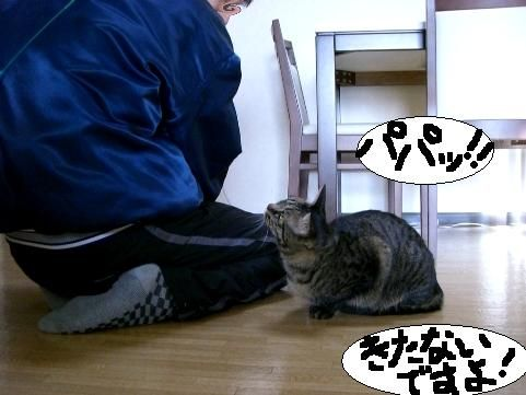 年末ぱやぱや9