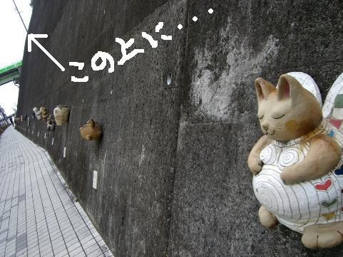 招き猫通りの猫たち1