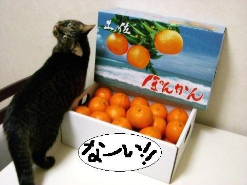 ぽんかん10