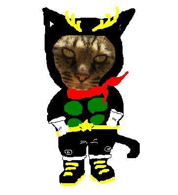ライダー猫