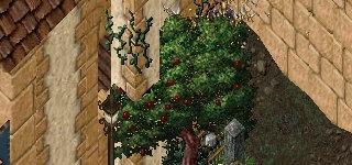 残念なリンゴの木。
