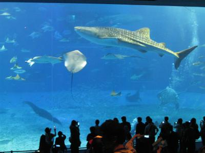 沖縄⑫ ジンベエザメ