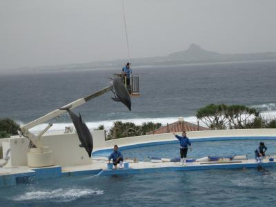 沖縄⑮ イルカ