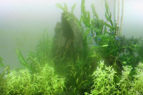 霧にむせぶ(?)水景