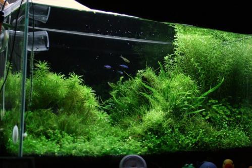 H23.5.15の60cm水槽