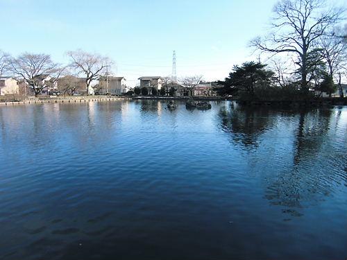 乃木神社の池