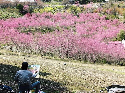 大内沢花桃の郷 (2)