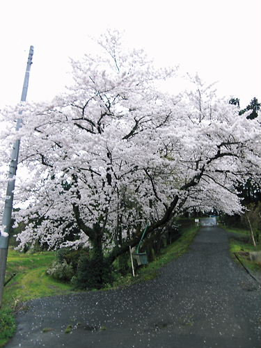 笹岡城 (2)