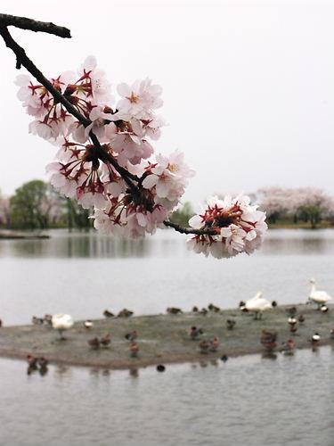 瓢湖 (2)