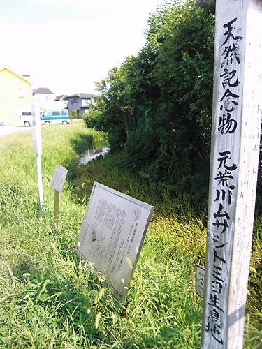 ムサシトミヨ