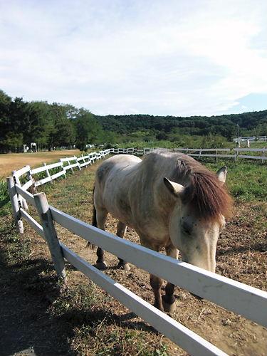 巾着田の馬