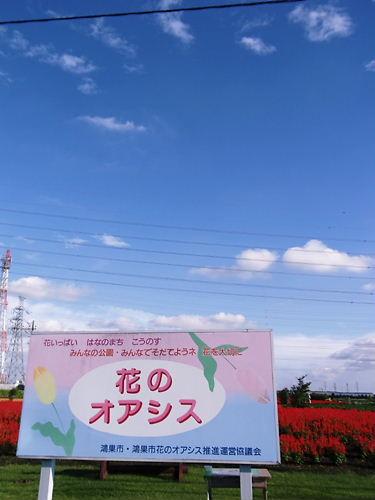 花のオアシス (6)