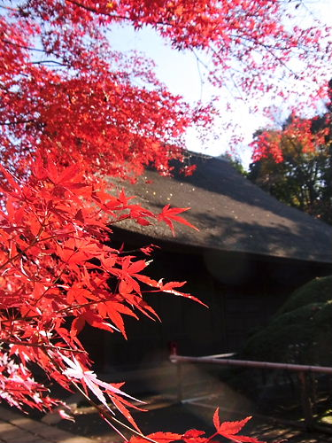 平林寺仏殿 (2)
