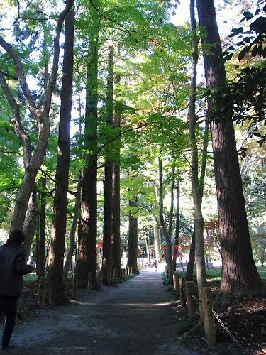 平林寺散策道
