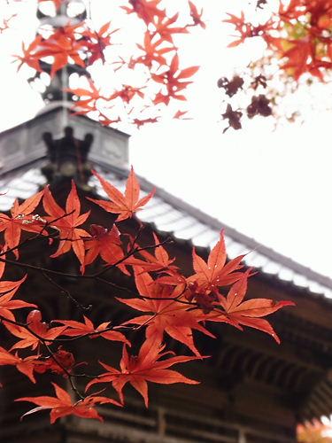 高源寺 (6)