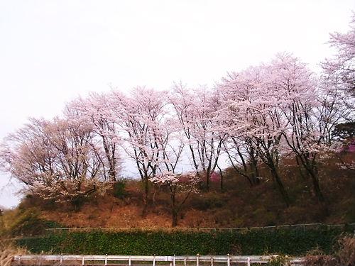 物見山 (3)