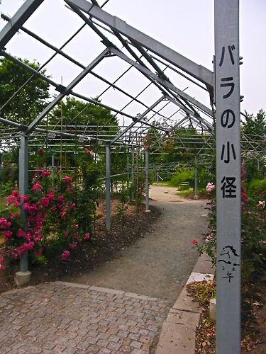 平成の森公園の薔薇の小径