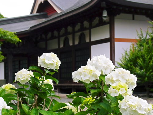 広徳寺本堂