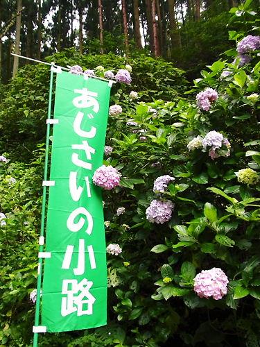 あじさいの小路 (3)