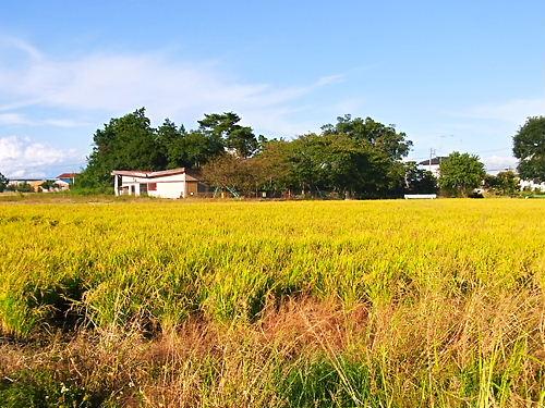 皿尾城遠景