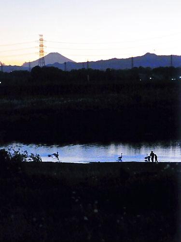 川島の白鳥と富士山