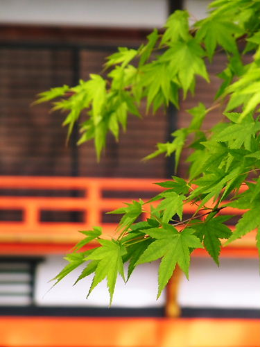 宇佐青紅葉