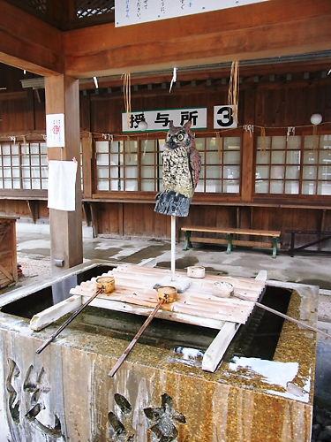 八坂神社梟