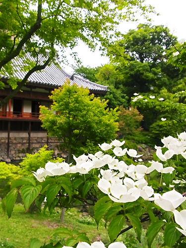 小倉城庭園 (2)