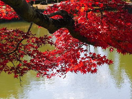 聖天池紅葉