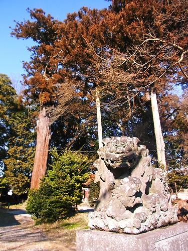八和田神社の狛犬と大杉