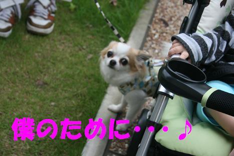 20100602_2.jpg