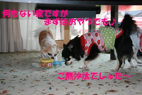 20100603_3.jpg