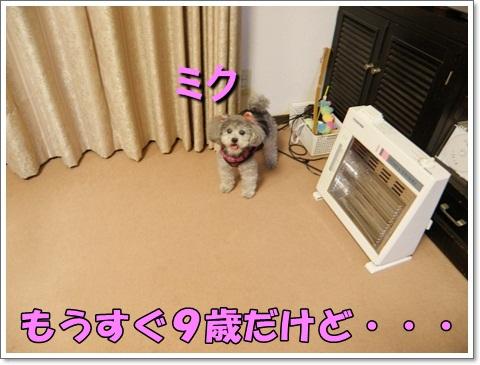 P1080077.jpg
