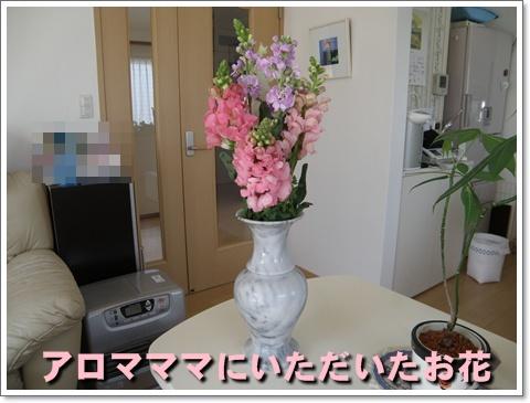 P3280013.jpg