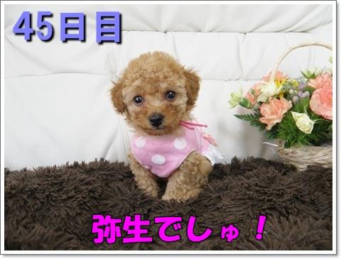 P4270055a.jpg