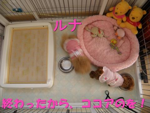 PC310029.jpg