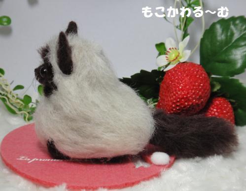 香箱ヒマラヤン2