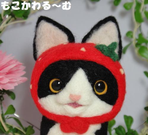 苺マト黒白はちわれ2