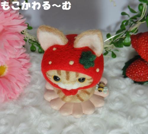 苺マト茶トラ5