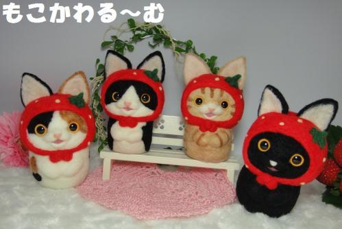 苺マト茶トラ6
