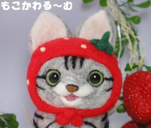 苺マトアメショ2