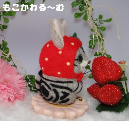 苺マトアメショ4